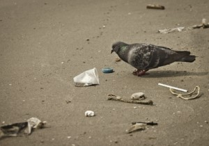 Pigeon Trash
