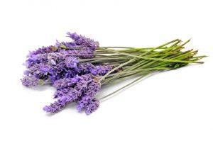 Terpenes in Essential Oils: Benefits That Go Beyond Skin Deep